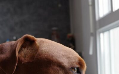 Grooming Tips and Advice for Your Pit Bull Terrier
